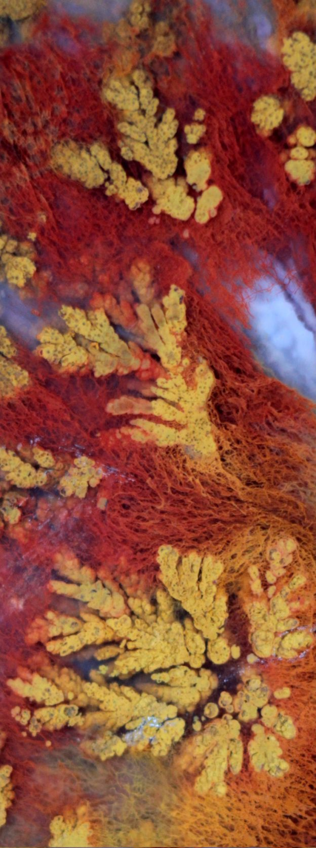 moss and plume agate macrophotograph