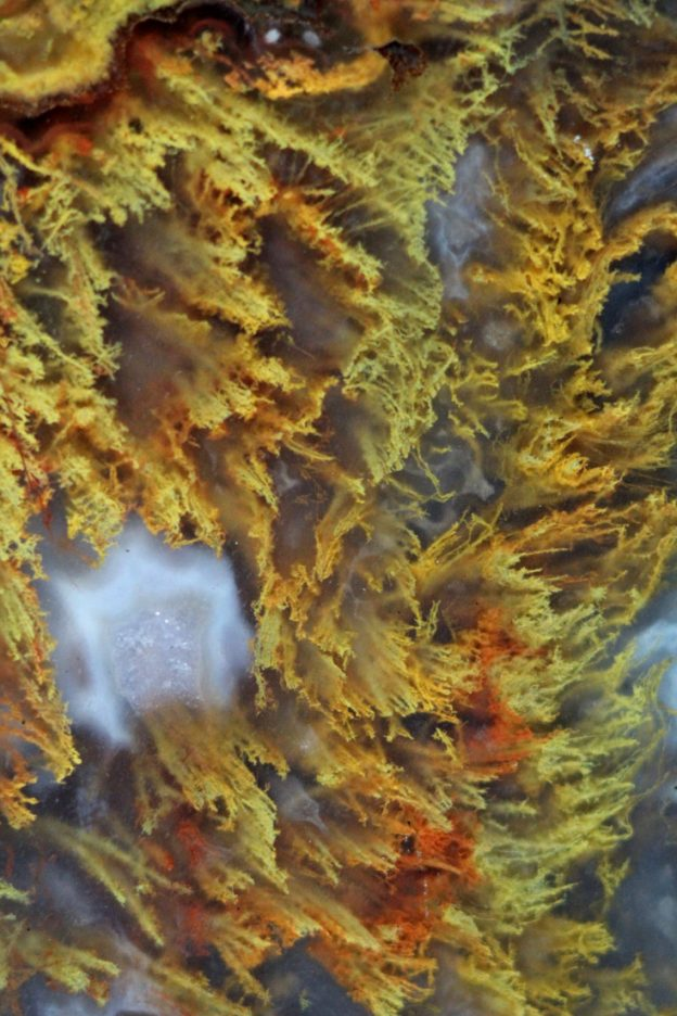 A striking moss agate close-up photograph.