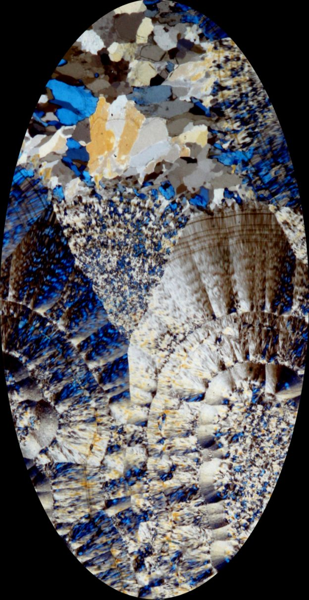 Thin section macrophoto of Nyssa plume agate